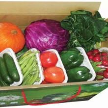 正规企业蔬菜配送东莞学校厨房蔬菜配送