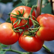 农产品配送公司蔬菜配送供应商海鲜水产配送