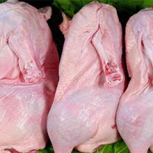 安全食材配送肉禽水产配送正规企业蔬菜配送