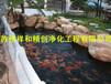 找可信的锦鲤池设计施工鱼池过滤仓建设一站式服务常年水清