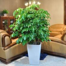 广州南沙绿植租摆,自有花场,专业团队竭诚为您服务