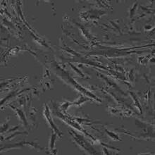 SCC-9传代形式细胞株哪提供