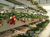 新型草莓立體種植槽科環品牌廠家