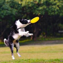 深圳寵物攝影工作室/深圳哪里有寵物攝影工作室圖片