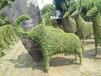 女贞动物造型苗木