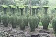女贞瓶器造型绿化苗木供应