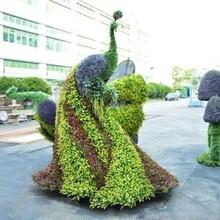 仿真绿雕,园林绿化雕塑造型定制,孔雀绿雕图片