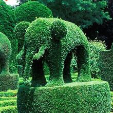仿真绿雕质量优秀成都千蜀园林绿雕图片