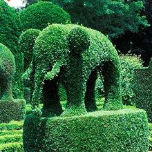 仿真绿雕质量优秀成都千蜀园林绿雕