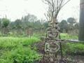 四川植物造型,紫薇造型字,紫薇中国结图片