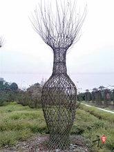 1.8米紫薇花瓶800元出售紫薇最新花瓶桩苗圃直销