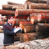 首次进口东南亚橡胶木需要什么单证