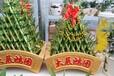 武汉富贵竹笼盆栽开运竹大型绿植净化空气植物花卉盆景,可租摆,武汉送货上门