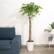 武漢園林綠化公司提供花卉綠植銷售,武漢綠化租擺養護