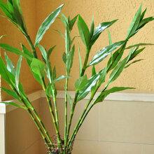武汉绿化苗木庭院苗木种植维护,武汉室内外植物出租维护服务