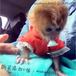 湖南哪里有卖猴子的价格是多少
