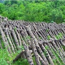 在哪可以买到天然优质的陕西特产秦岭野生木耳?