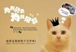 广州福懋公猫绝育
