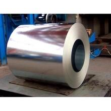 优质Q235C带钢-优质Q235C带钢《树博商贸报价》