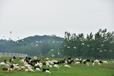 巴布洛生态谷牧场风光