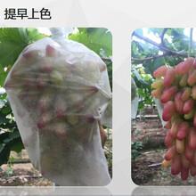 厂家直销农夫一品生态膜葡萄袋着色快透光透气防水防鸟水果套袋
