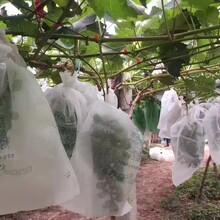 厂家直销农夫一品生态膜葡萄袋透光透气防水防鸟水果套袋