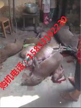 杭州超声波捕野猪机器