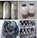 青岛蘑菇菌种