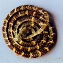 特价纯天然银环蛇毒
