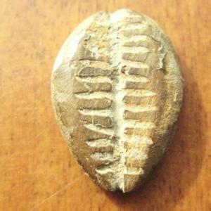 南陵县大清铜币收藏价值