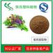 紫苏叶提取物10:1慧科厂家直销品质保证现货包邮