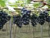 乐活户外大本营金秋之际优惠活动吃货套餐团队拓展+送葡萄