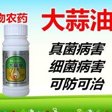 大蒜油在云贵地区蔬菜病害的用药效果图片