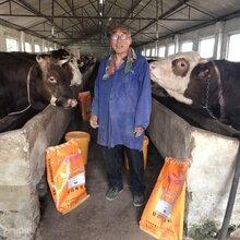 梧州牛用瘤胃素瘤胃素在牛羊催肥上起什么作用(专业快速)图片