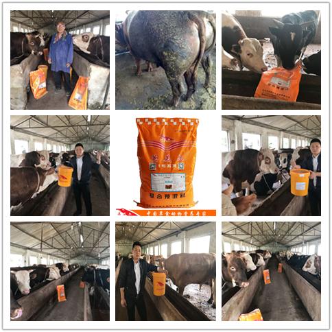 牛饲料多少钱一吨-高端牛羊饲料英美尔