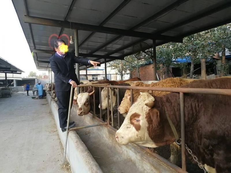 育肥牛饲料配方实惠的