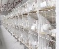 獭兔的饲养管理扬州市高邮市