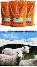 养羊的全程饲料育肥羊喂什么上膘快效果杠杠的图片