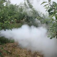 操作简单的烟雾水雾打药机高效蔬菜大棚水雾打药机节省人工效果好图片