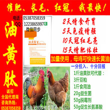 土公鸡冠张红公鸡毛色更亮土鸡催肥增重药
