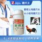 公雞快速長腳蹬子150天土雞吃啥快速長蹬爪雛雞養殖管理方法圖片