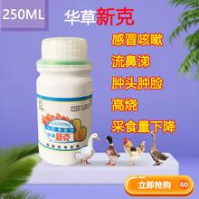 鵝病鵝流感用什么藥有效鵝發燒用什么藥鵝感冒治好病圖片