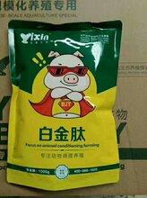 猪吃什么长的快日长3斤图片