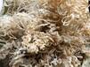 浙江省塑料王管專門回收廠家臺州塑料王刨花回收價格多少錢一公斤