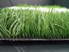 塑料草坪生产厂家、足球草、幼儿园草、跑道草等