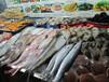 深圳專業代理清關進口冰鮮海鮮類產品