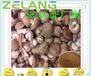 香菇濃縮粉,果蔬粉固體飲料ODM