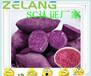 紫薯濃縮粉,果蔬復合壓片糖果ODM