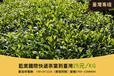 东莞发茶叶到台湾快递专线专业双清包税到门价格优惠