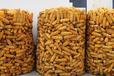 圈玉米网、玉米临储仓、圈玉米网片